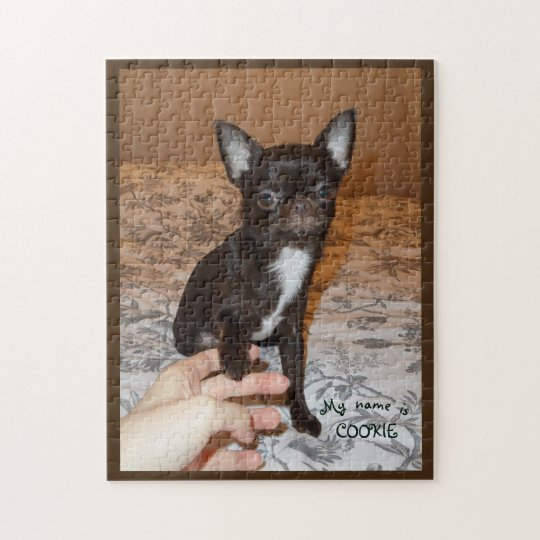 puzzle chihuahua marron blanc assis portrait nom