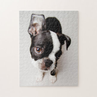 Puzzle Chiot d'Edison Boston Terrier
