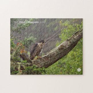 Puzzle Chute - faucon pérégrin