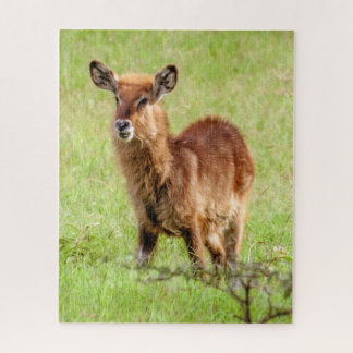 Puzzle De Getty jeune Brown antilope Waterbuck des images