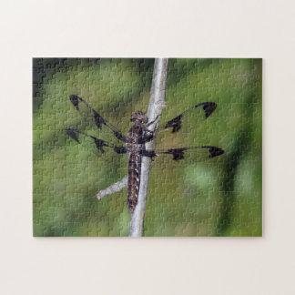 Puzzle de libellule d'écumoire repéré par douze