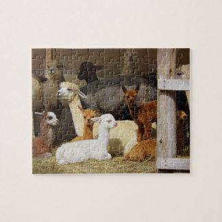 Puzzle de photo de grange d'alpaga
