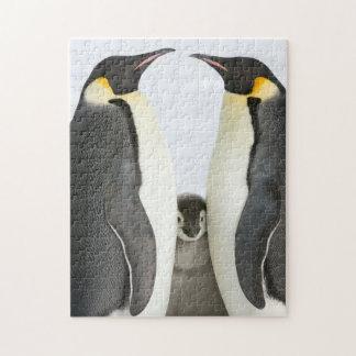 Puzzle de pingouin d'empereur