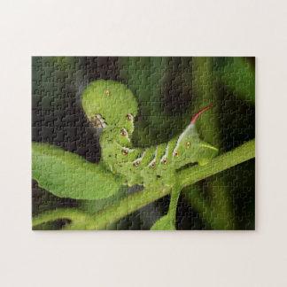 Puzzle de plante de tomate de Hornworm Caterpillar