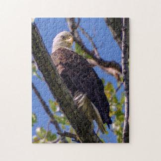 Puzzle d'Eagle chauve