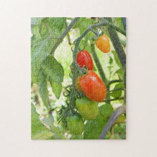 Puzzle denteux de maturation de tomates