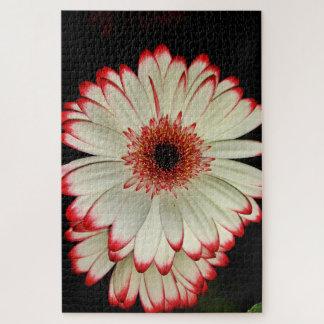 Puzzle Deux fleurs blanches de marguerite de Gerbera sur