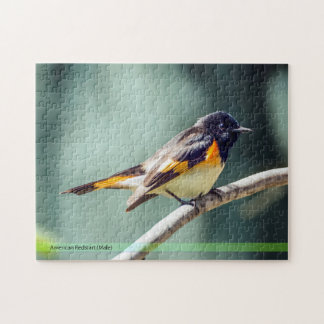 Puzzle d'oiseau de Redstart d'Américain