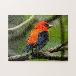 Puzzle d'oiseau de Tanager d'écarlate