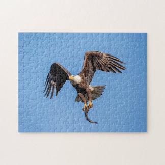 Puzzle Eagle chauve avec un poisson