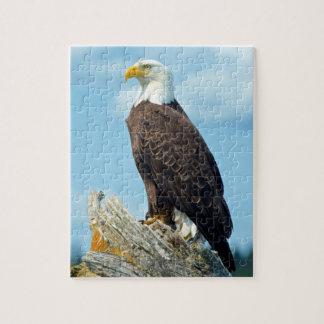 Puzzle Eagle chauve été perché sur le rondin, Canada