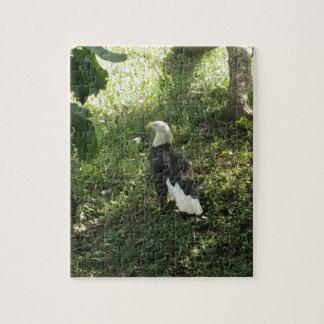 Puzzle . Eagle chauve nord-américain