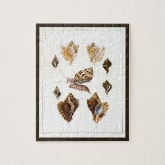 Puzzle Escargots vintages et mollusques, organismes