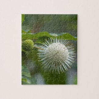 Puzzle Fleur sauvage blanc de Buttonbush