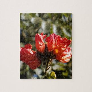 Puzzle Fleurs d'un tuliptree africain