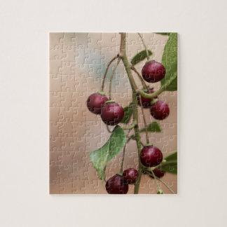 Puzzle Fruits d'un nerprun brillant de feuille