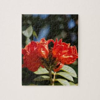 Puzzle iFlowers d'un tuliptree africain