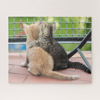 Puzzle Images de Getty | deux chatons sur un balcon