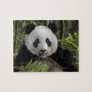Puzzle Jeune panda heureux, Chine
