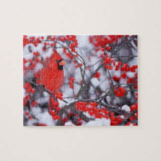 Puzzle Mâle cardinal du nord, hiver, IL