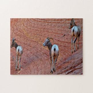 Puzzle Moutons de montagne Utah