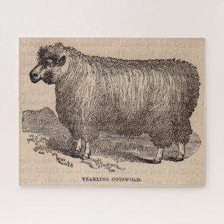 Puzzle Moutons d'un an de Cotswold d'impression du 19ème
