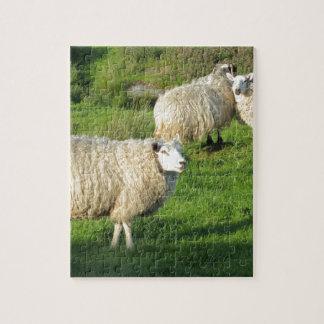 Puzzle Moutons irlandais