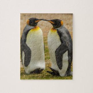Puzzle Paires du Roi pingouins, Malouines