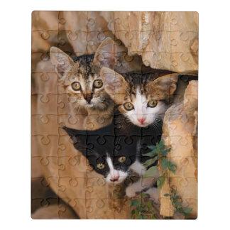 Puzzle Photo drôle de trois de chat visages curieux