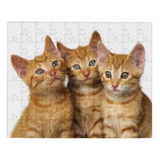 Puzzle Photo principale de trois de gingembre de chat