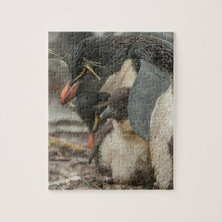 Puzzle Pingouin et poussin de Rockhopper
