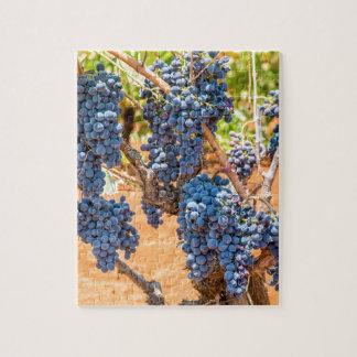 Puzzle Plante de raisin avec les groupes grapes.JPG bleu