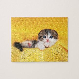 Puzzle Pli d'écossais ; est une race de chat avec un