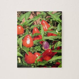 Puzzle Poivrons de piment rouge accrochant sur le plante