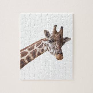 Puzzle Portrait de girafe sur le blanc