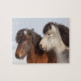 Puzzle Profil islandais de cheval, Islande