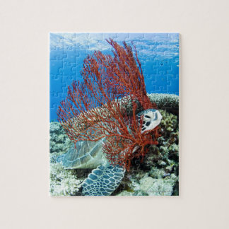 Puzzle Repos de tortue de mer