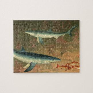 Puzzle Requin bleu vintage mangeant des poissons, espèce