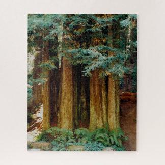 Puzzle Séquoias