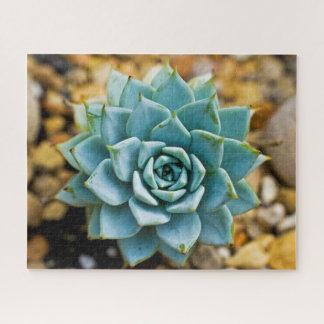 Puzzle Succulent