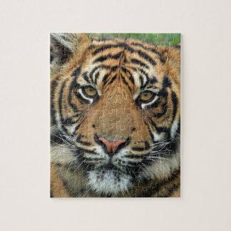 Puzzle Tigre adulte