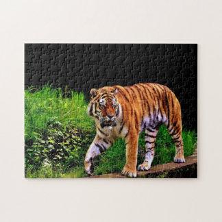 Puzzle Tigre magnifique