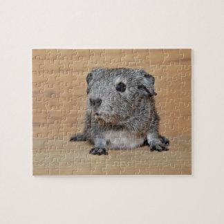 Puzzle Un cobaye gris mignon sur le bois de Brown