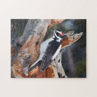 """Puzzle """"Woody Woodpecker"""" en parc national de montagne"""