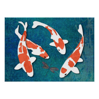 Quartet de Kohaku orange et blanc Koi Affiches