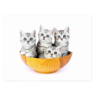 Quatre jeunes chats se reposant dans la cuvette en carte postale
