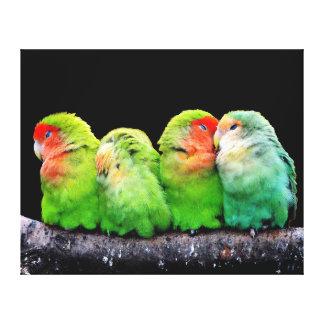 Quatre perroquets adorables enveloppent ensemble toiles