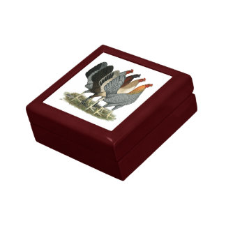 Quatre poules de Gamefowl Petite Boîte À Bijoux Carrée
