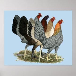 Quatre poules de Gamefowl Posters