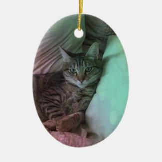 Quelle vie a recouvert la photo de chat décoration de noël